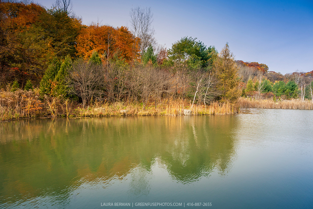 Pond and wetland vegetation in autumn
