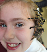 24/11/2019 repro free: Abaigh 9 McDonagh from Milltown  and Sophia the Tarantula  during the Bug Doctor's  talk  on the last day of the Galway Science and Technology Festival  at NUI Galway where over 20,000 people attended exhibition stands  from schools to Multinational Companies . Photo:Andrew Downes, xposure