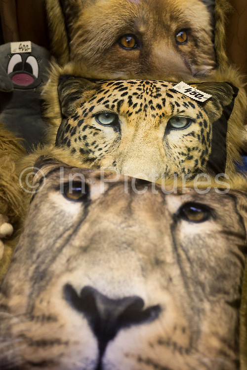 The faces and eyes of big cats and a wolf on cushions peer out of a shop on Milady Horakove street, Holesovice district, Prague 7, on 19th March, 2018, in Prague, the Czech Republic.