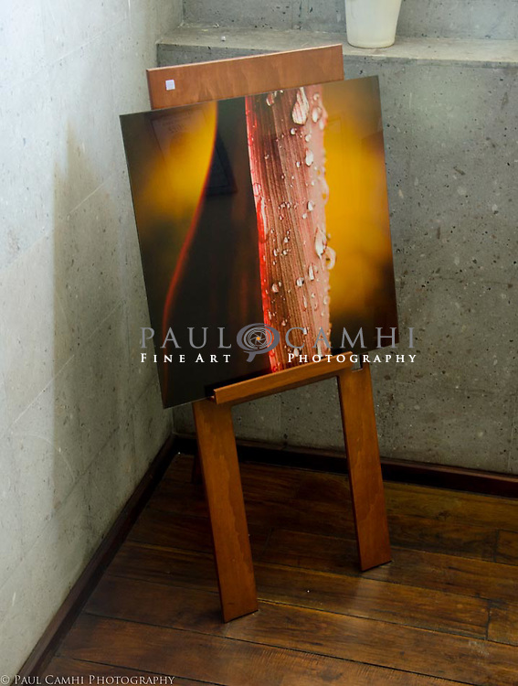 Después de la lluvia. 80 x 80 cm. Papel metálico con acrílico. Limited edition Fine Art Photography, pigment ink giclée print, dated and signed