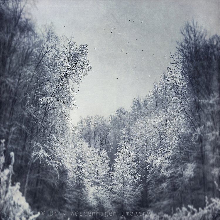 Hoarse frost covered trees in a nearby forest. Texturized photograph<br /> <br /> Prints: http://society6.com/DirkWuestenhagenImagery/Dreamy-Ice-World