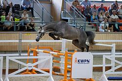 037, Nirmosa MB<br /> KWPN Kampioenschappen 2021<br /> Ermelo <br /> © Hippo Foto - Dirk Caremans<br /> 13/08/2021
