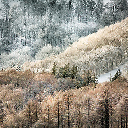 NISEKO WINTER FOREST VIEWS