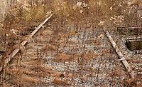 Overgrown unused train tracks.