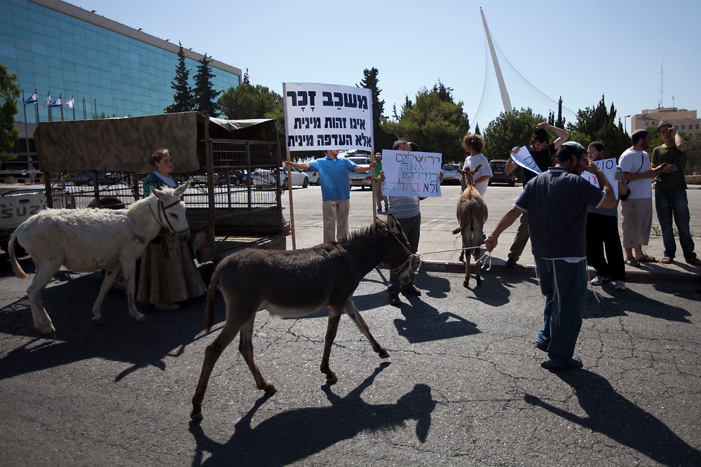 Ultra-Orthodox Jewish men hold banners opposing the gay pride parade, as they stand near donkeys at the beginning of what they call a 'beast parade' held in Jerusalem, on July 28, 2011. The anti gay pride parade is part of the protest parades against the mass event held by the gay-lesbian community nearby at the same time.