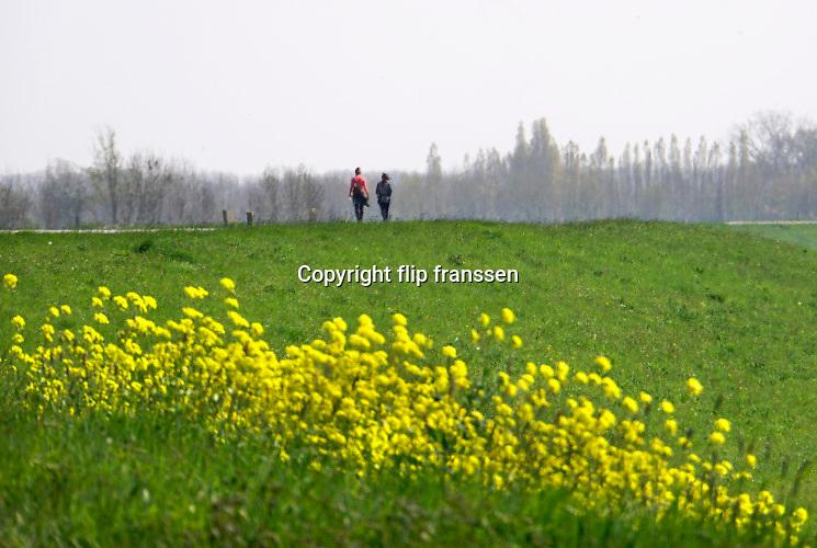Nederland, Batenburg, 16-4-2019 Wandelaars op de dijk. De Liendense Waard is een natuurontwikkelingsgebied in de uiterwaarden van de Maas tussen Batenburg en Niftrik. Het gebied is ontwikkeld door Rijkswaterstaat in het kader van het project Ruimte voor de Rivier. Een oude Maasarm die bij de kanalisatie van de Maas was dichtgegooid werd opnieuw uitgediept en er werden enkele nieuwe poelen uitgegraven. Het hele terrein tot aan de dijk doet nu dienst als overloopgebied.De natuur die zich hier ontwikkelt, is te beschrijven als een combinatie van ruig grasland, dat wordt begraasd door een oud runderras, en ooibos van voornamelijk wilgen en elzen. Een deel van het gebied is plasdrasterrein dat veel steltlopers en weidevogels aantrekt. Het gebied wordt beheerd door Geldersch Landschap en Kastelen. Bakenbomen langs de rivier de Maas gaan verdwijnen door het uitsterfbeleid van Rijkswaterstaat. Bij hoog water waren de bomen een hulpmiddel voor navigatie, een baken voor de schippers . Deze bakenbomen zijn karakteristiek voor het landschap langs de rivier de Maas . Op veel plaatsen langs de meanderende maas zijn nevengeulen aangelegd om het water meer ruimte tegeven . Staatsbosbeheer en rijkswaterstaat leggen natuurgebieden aan in de uiterwaarden van de grote rivieren . Natuurontwikkeling in de uiterwaarden en rivierverruimende projecten voor een betere afvoer van het water .Foto: Flip Franssen