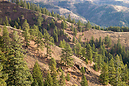 A sparse forest and rangeland on the Touchet River drainage in Umatilla National Forest in the Blue Mountains, Washington, USA