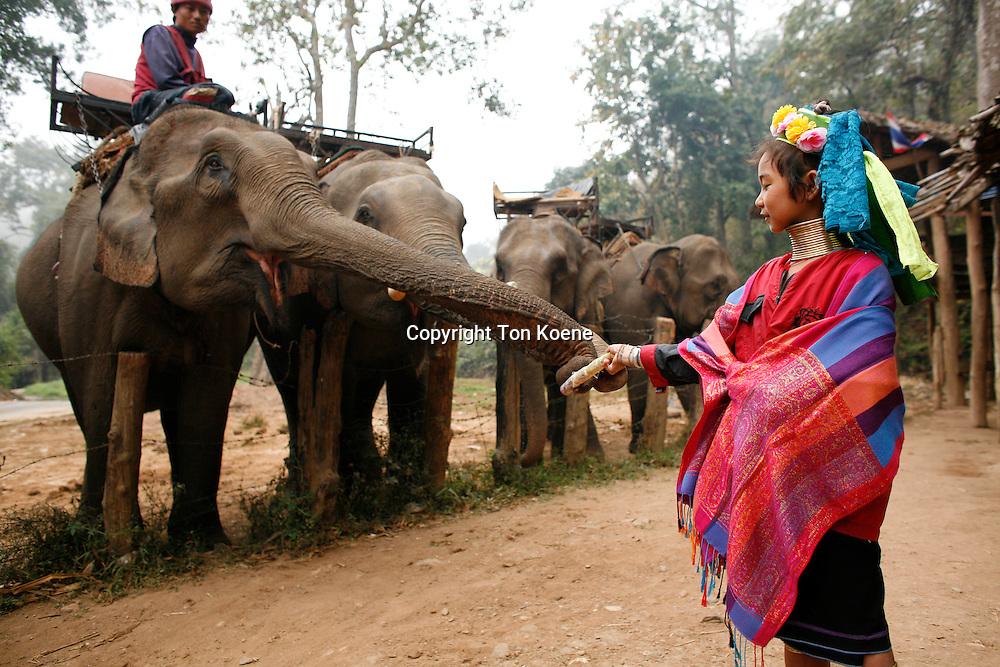 Karen tribe (longneck) in Thailandelephant in Thailand