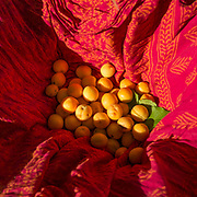 Apricots are gathered in a red scarf.