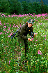Alaska: Lake Clark Natl Park.  Bear Camp for grizzly bear viewing.  Ranger looking at wildflowers.  Photo akbear104..Photo copyright Lee Foster, 510/549-2202, lee@fostertravel.com, www.fostertravel.com