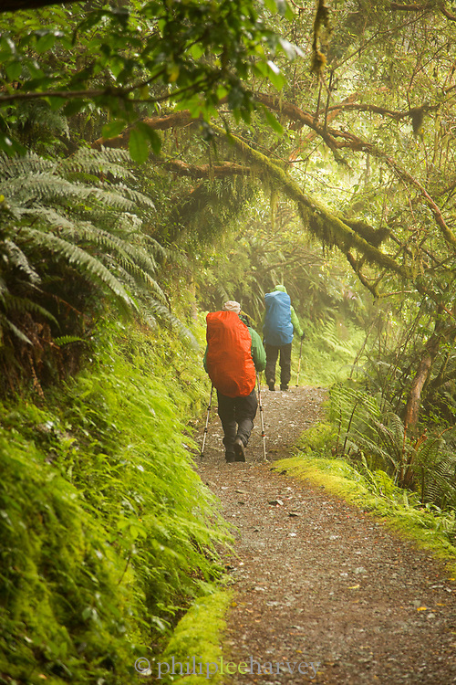 Rear view of two backpackers hiking along Routeburn Track between Lake Mackenzie to Divide Shelter, South Island, New Zealand