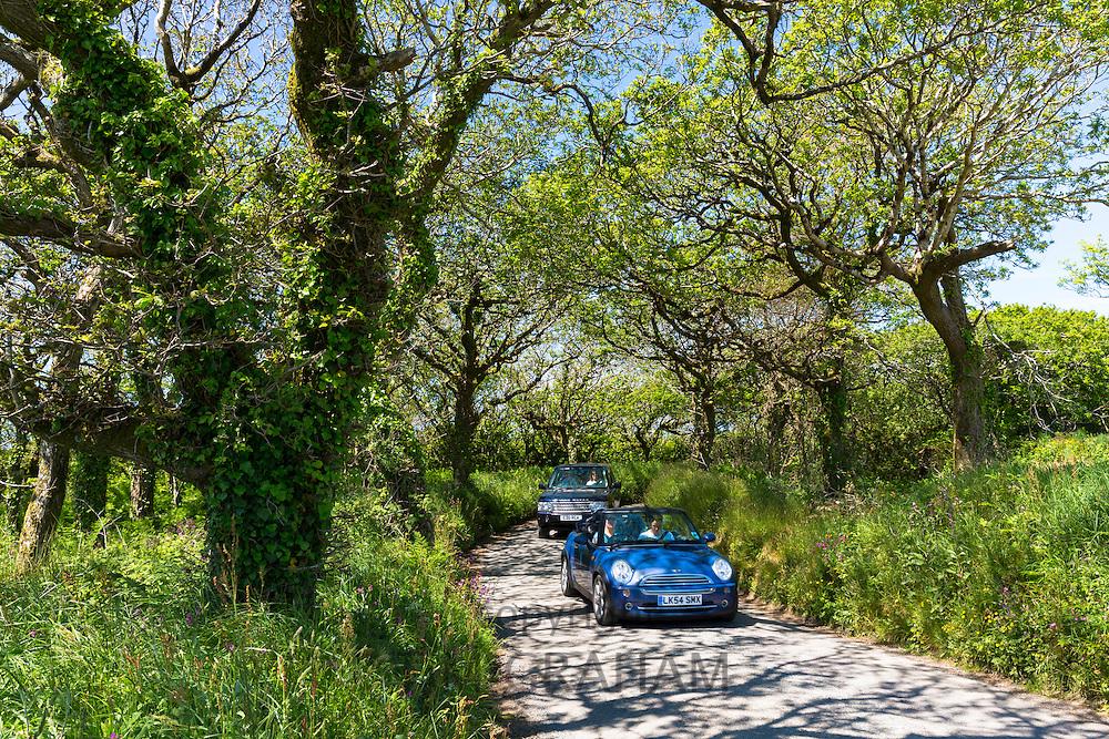 Driving blue Mini convertible saloon car along country lane at Hartland  in North Devon, Southern England, UK
