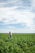 Mike Heath, Organic Potato Farmer near Twin Falls, Idaho.