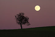 Moon rising over tree in field.