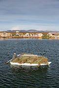 Man transporting freshly Harvested reeds to an Island, Lake Titicaka, Puno, Peru, South America