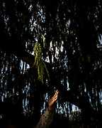 My daughter reaches for a branch in the lake in the middle of the city on May 23, 2020 in Buenos Aires, Argentina. Abundance of fishes, birds and nutrias, crystal clear water and abundant plants are the blooming result of the human absence. Argentina entered a full lockdown on March 20 that endured more than four months. After a month, I got worried about my daughter's sleeping issues and took her for forbidden walks to the nearby park and lagoon.