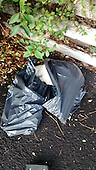 Dead Greyhound wrapped in bin bags and dumped in Essex