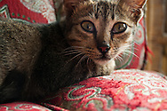 A kitten unsure if she wants to be photographed in the town of Tuk Tuk, Samosir Island, Lake Toba, Sumatra