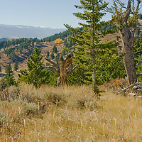 Bill and Sally Feniger's land in Bridger Mountains above Bozeman Montana.