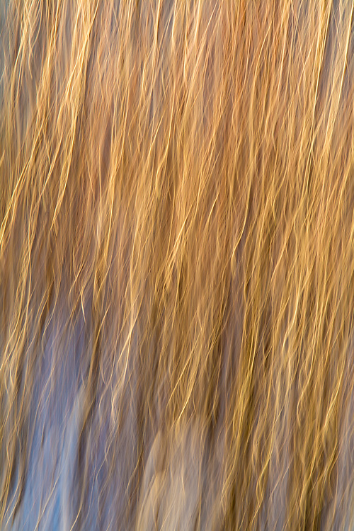 Abstractions in nature: jerking the camera with a long shutterspeed.