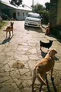 Dogs in a village on the Camino de Santiago, October, 2016.