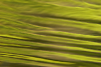 The fresh green leaves of spring created this bright green reflection in the pool at Wyman Meadow next to Walden Pond.