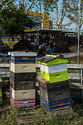 Stacks of bee hives at the Red Hook Community Farm.