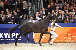 540 - Glamourdale<br /> KWPN Stallion Selection - 's Hertogenbosch 2014<br /> © Dirk Caremans