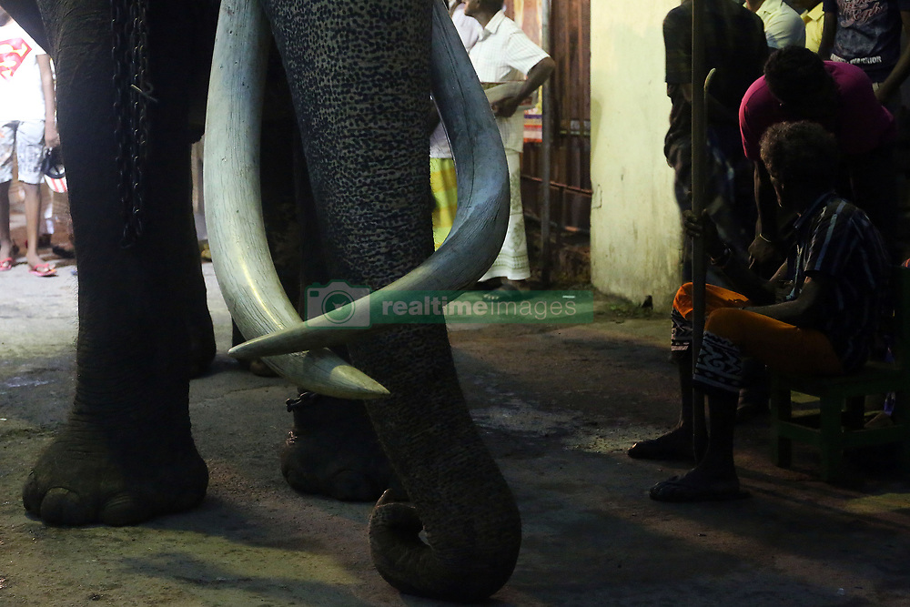 June 25, 2017 - Colombo, Western Province, Sri Lanka - Sri Lankan mahout Wilson Kodituwakku alias Kalu Mama, 65 years old, (R) sits beside Nadungamuwa Raja, 64 years old tusker, who is famous for carrying the sacred relics caskets ahead an annual 'perahera' or Buddhist religious procession in Colombo, Sri Lanka, 24 June 2017. (Credit Image: © Sanka Vidanagama via ZUMA Wire)