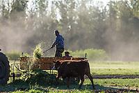 PEONES TRABAJANDO CON GANADO VACUNO EN UNA ESTANCIA, GENERAL RODRIGUEZ, PROVINCIA DE BUENOS AIRES, ARGENTINA (PHOTO © MARCO GUOLI - ALL RIGHTS RESERVED)