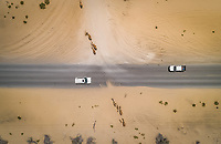 Aerial view of two cars and camels on desert road in Dubai, UAE.