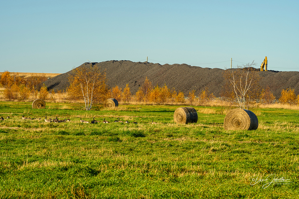 Rehabilitated tailings with hay bales, Greater Sudbury- Copper Cliff. Vale Central Tailings Facility, Ontario, Canada