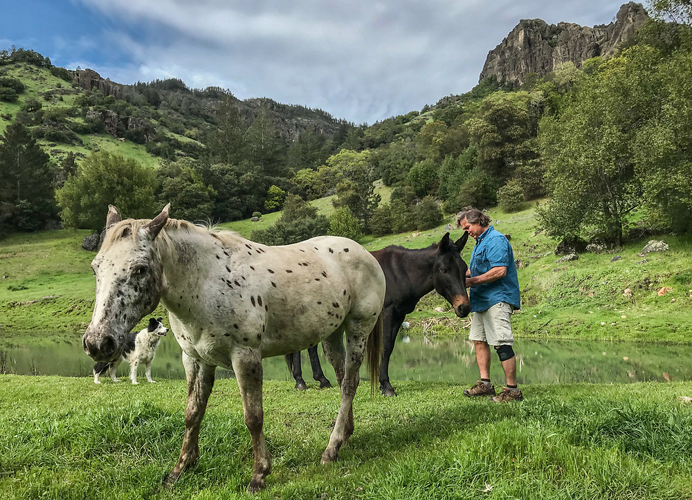 """""""This mule is a bit ornery but I like his character.""""  -Video producer and care taker Gary Feller and his dog, Zoe, tend to his neighbor's horses and mule who graze on the 165 acres of land he oversees above Calistoga."""