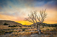 Orange sunset behind a dead tree in the Drum Mountains of Utah