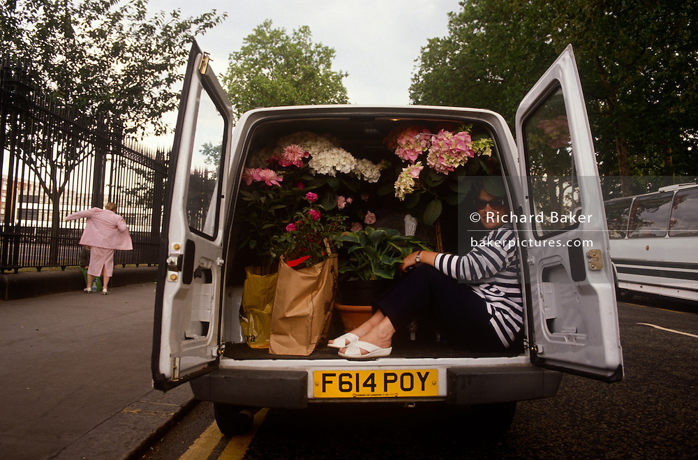 A lady is sandwiched between her just purchased flowers in the back of a white van, returning home from the annual Chelsea Flower Show. It is a summer May afternoon in west London, when lovers of horticulture have gathered from across the country to admire the ultimate in plants and flowers in the grounds of Chelsea Hospital. With its pink blooms hanging from the main bulk of the shrub, the Fuchsia is resplendent in the late sunshine, a scene of quintessential English gardens and long summer days.
