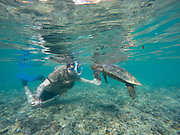 young man snorkeling and swimming with a Hawksbill sea turtle (Eretmochelys imbricata). This is the smallest of the marine turtles, rarely more than a metre in length. It lives in warm seas and oceans throughout the world, preferring shallow water. It eats mainly fish and crustaceans. This species is critically endangered. Photographed in the Seychelles, in February