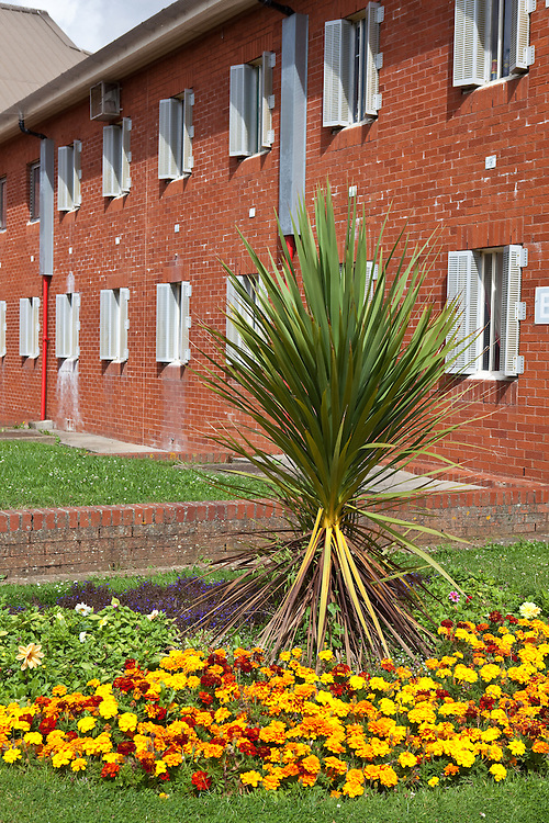 A palm tree and flowers planted in the prison grounds. HMP The Mount, Bovingdon, Hertfordshire