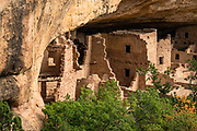 Spruce Tree House was built between 1211-1278 CE on Chapin Mesa in Mesa Verde National Park, Colorado, USA. Mesa Verde National Park is a UNESCO World Heritage Site. The park protects some of the best-preserved Ancestral Puebloan archaeological sites in the United States, and was established by Congress and President Theodore Roosevelt in 1906 near the Four Corners region of the American Southwest. Starting around 7500 BCE, Mesa Verde was seasonally inhabited by nomadic Paleo-Indians. Later, Archaic people established semi-permanent rockshelters in and around the mesa. By 1000 BCE, the Basketmaker culture emerged from the local Archaic population, and by 750 CE the Ancestral Puebloans had developed from the Basketmaker culture. The Mesa Verdeans survived using a combination of hunting, gathering, and subsistence farming of crops such as corn, beans, and squash. They built the mesa's first pueblos sometime after 650, and by the end of the 1100s began building massive cliff dwellings. By 1285, following a period of social and environmental instability driven by a series of severe and prolonged droughts, they abandoned the area and moved south into what is today Arizona and New Mexico.