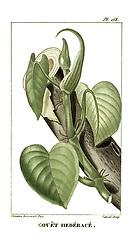 Flore pittoresque et médicale des Antilles, ou, Histoire naturelle des plantes usuelles des colonies françaises, anglaises, espagnoles, et portugaises /<br />Paris :Ches l'Editeur,1833.<br />https://biodiversitylibrary.org/page/53328446