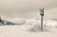 Infrared walk in Labonte's Field.  ©2015 Karen Bobotas Photographer