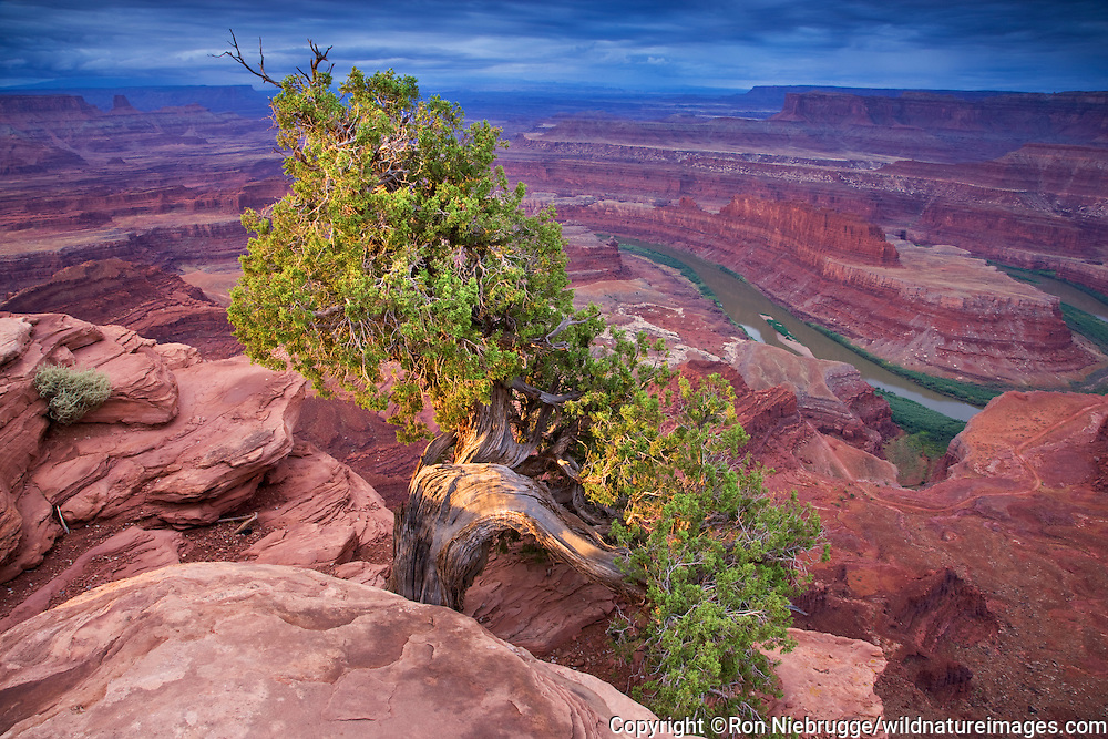 View from Dead Horse Point in Dead Horse State Park, looking into Island in the Sky District, Canyonlands National Park, near Moab, Utah.