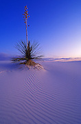Yucca and dune patterns at dusk, White Sands National Park, New Mexico USA