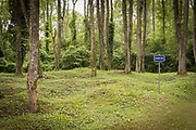 Information sign surrounded by trees in forest