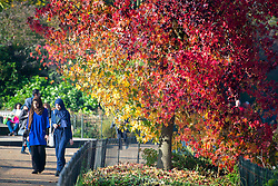 © Licensed to London News Pictures. 01/11/2015. London, UK. Two young women walk past a tree displaying a full rage of autumn colours, from green through to deep red, in Hyde Park, Central London.  Photo credit: Ben Cawthra/LNP
