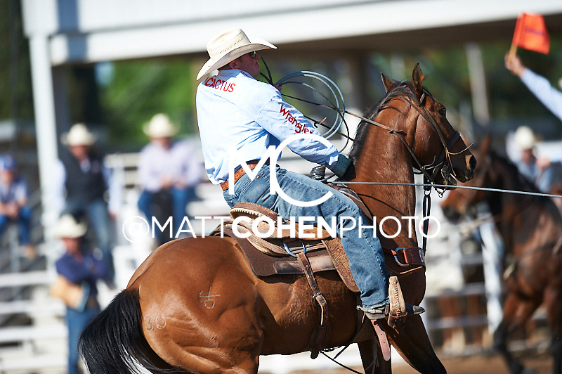 Team roper Caleb Twisselman of Santa Margarita, CA competes at the Clovis Rodeo in Clovis, CA.<br /> <br /> <br /> UNEDITED LOW-RES PREVIEW<br /> <br /> <br /> File shown may be an unedited low resolution version used as a proof only. All prints are 100% guaranteed for quality. Sizes 8x10+ come with a version for personal social media. I am currently not selling downloads for commercial/brand use.