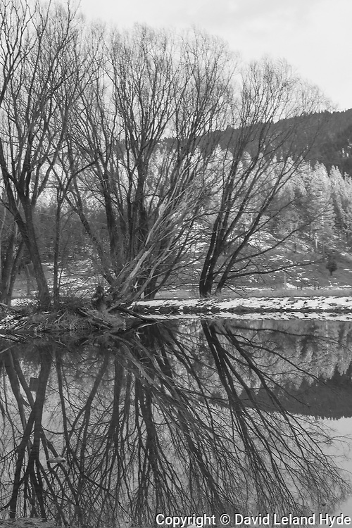 Tree Reflections, Newcomb's Walking G Ranch, Genesee Valley, California Ranches, Sierra Nevada Mountains, Cottonwoods, Duck Pond (Black and White)