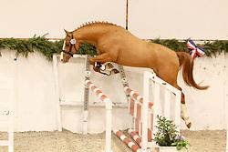 , 63 - Pferdestammbuch 12. - 14.02.2010, 129 - Codesko