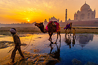 Boys and their camels at the Yamuna River, Taj Mahal in background, at sunrise, Agra, Uttar Pradesh, India
