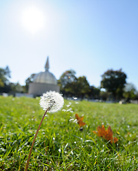 THEMENBILD - Herbst im Wiener Zentralfriedhof. Das Bild wurde am  14. Oktober 2012 aufgenommen. im Bild Verblühter Löwenzahn, lat. Taraxacum, // THEME IMAGE FEATURE - Autumn in Vienna at viennese central cemetery. The image was taken on october, 14th, 2012. Picture shows dandelion clock, AUT, EXPA Pictures © 2012, PhotoCredit: EXPA/ M. Gruber