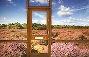 Photo image of Breckland heathland vegetation positioned on a building in Thetford, Norfolk, England